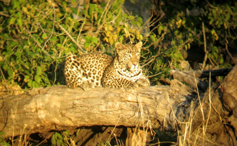 Gallery: Machaba Camp, Okavango