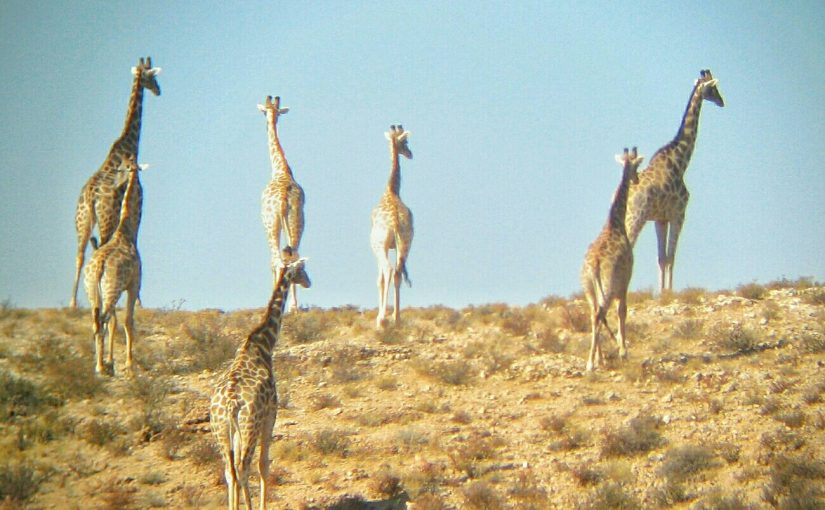 Gallery: Southern Namibia